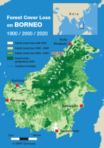 Deforestation rate because of palm oil in Borneo Malaysia