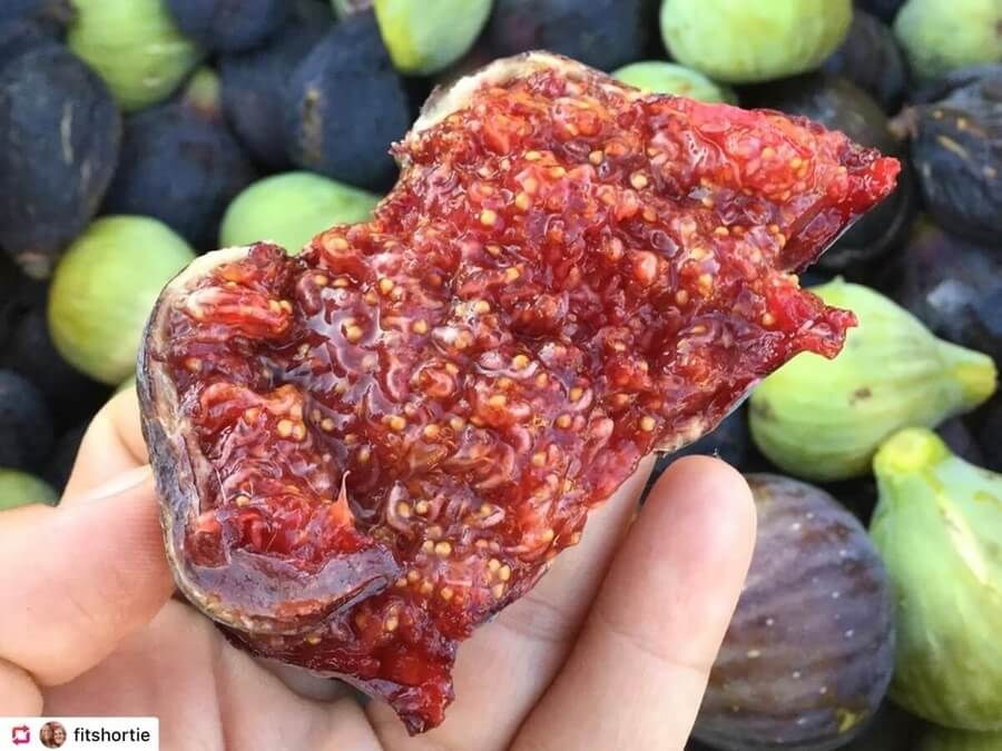 A super ripe delicious fig in the north of Spain
