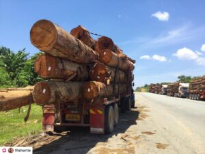 Truck loaded with tree trunks. Deforestation because of palm oil is a big problem!
