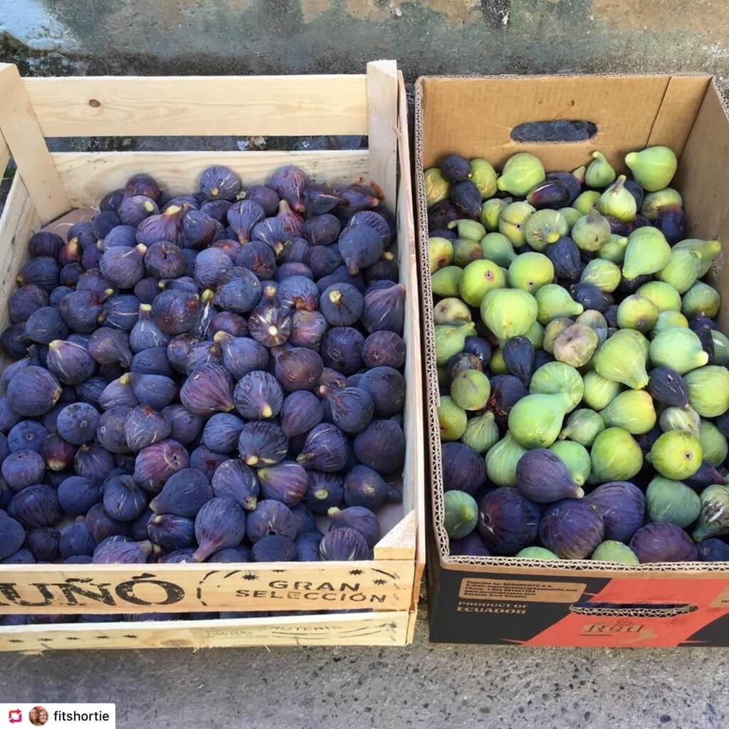 A box of delicous tree-ripened figs. There were the regular purple ones but also the green figs. Both perfect fruitarian food!