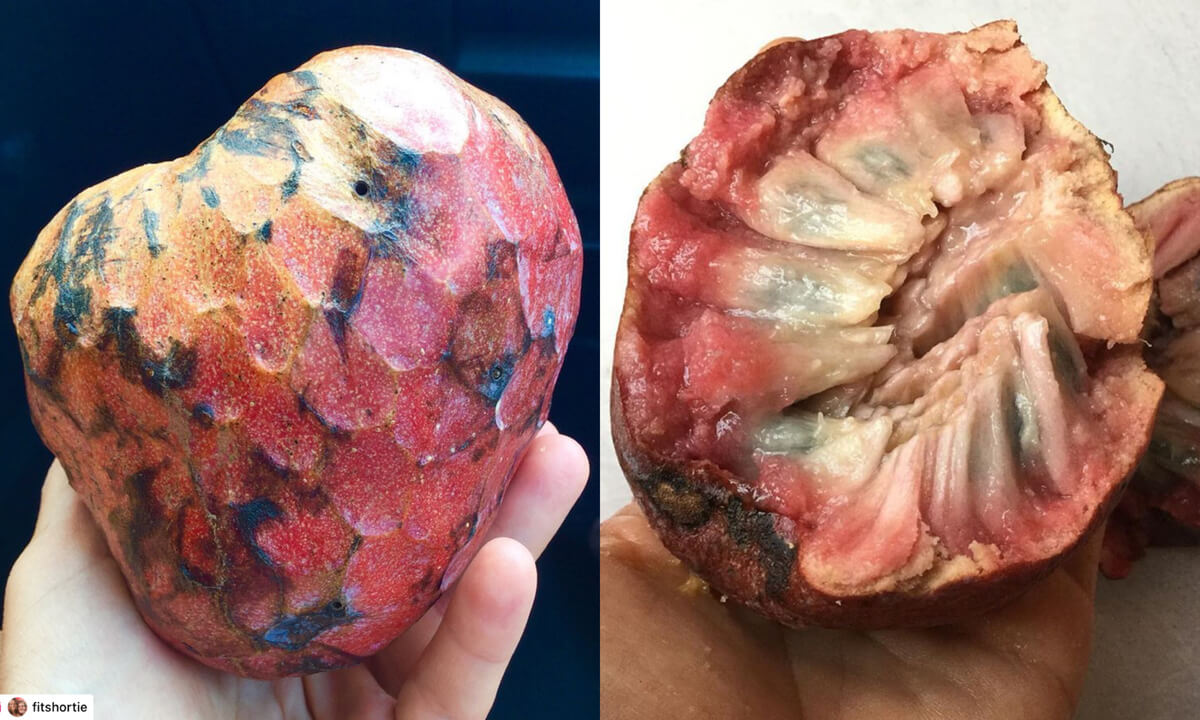 Red annona reticulata fruit or Bullock's heart custard apple. From the outside and cut open.